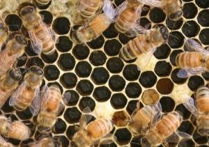 Newborn bees