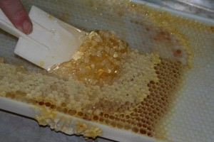 Removing the honey from the frames