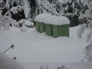 January snow on the hives