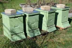 Life in all 4 hives in february